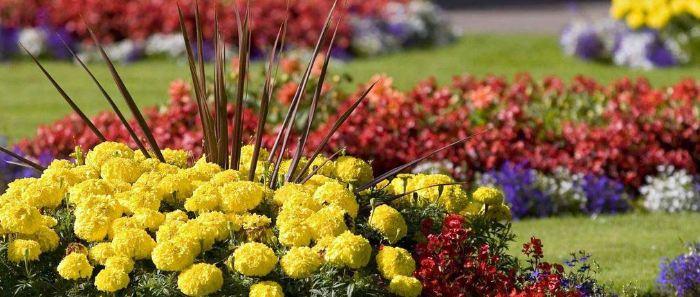 Цветы в личном саде
