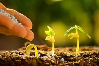 Подкормка и другие удобрения для огорода